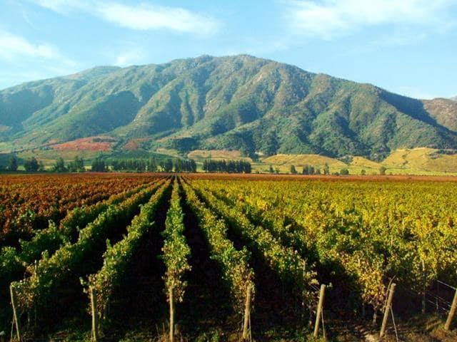 Passeios românticos nas vinícolas de Santiago