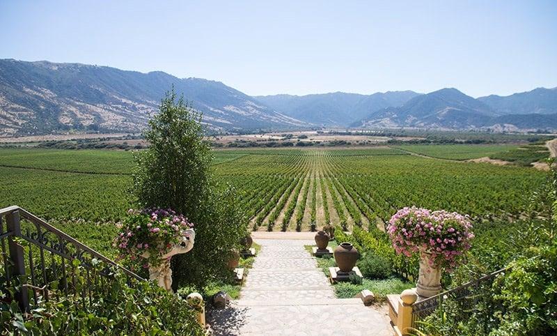 Visitar as vinícolas no verão