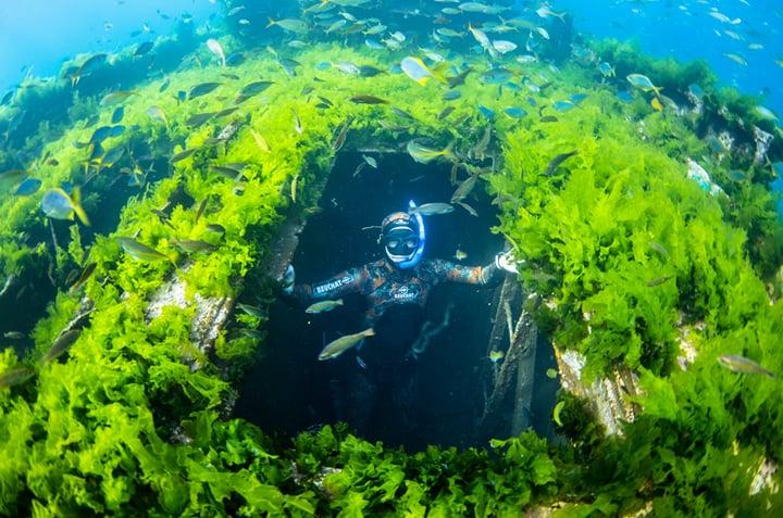 O que fazer nas Ilhas Juan Fernández