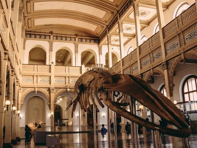 Museu Nacional de História Natural em Santiago do Chile