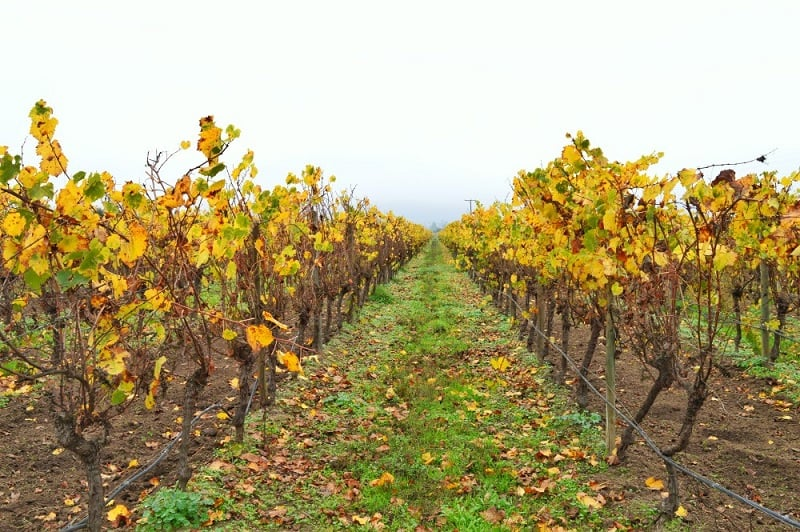Visitar as vinícolas em Santiago no mês de abril