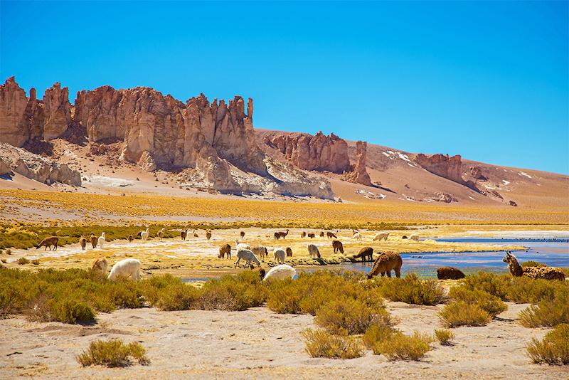 Salar de Tara em San Pedro de Atacama no Chile: animais