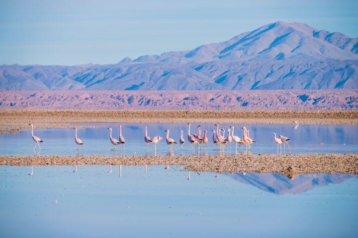 Salar de Tara em San Pedro de Atacama no Chile: flamingos