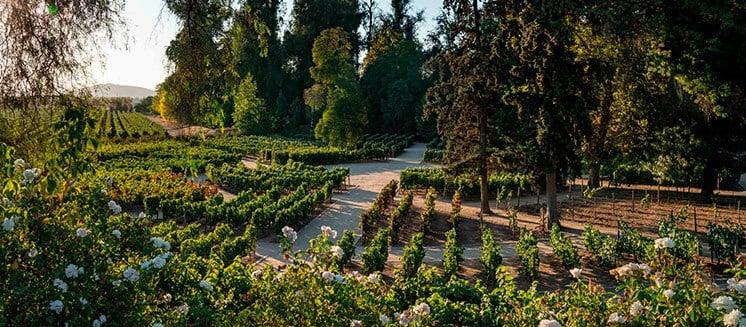 Beleza de vinícola Concha y Toro Marques