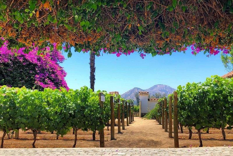 Ingresso para a vinícola Santa Rita em Santiago